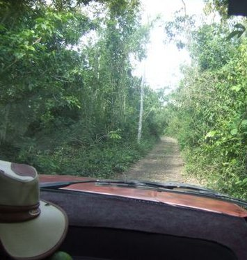 Narrow jungle road to Lost Maya City