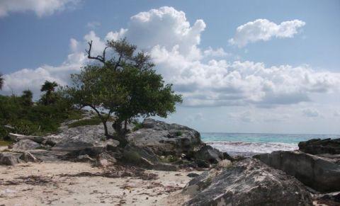 Tulum Beach - Mexican Caribbean